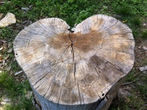 MG_heart stump